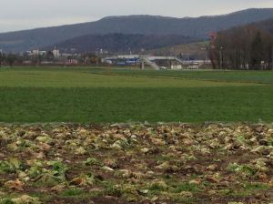 Ortoloco, Zurich - peri-urban CSA with a view of an Ikea